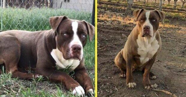 Pes zůstal opuštěný uprostřed pole a téměř rok nedovolil lidem se k němu vůbec přiblížit