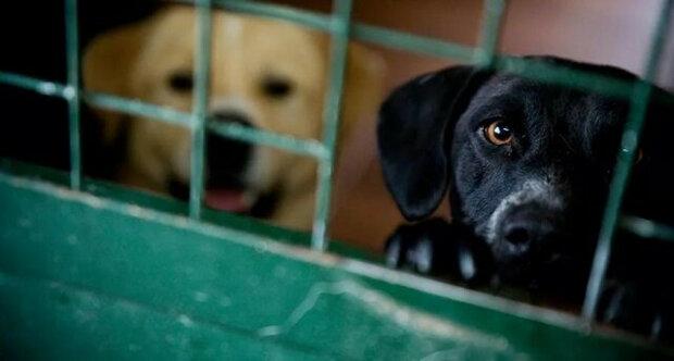 Pár čekal 27 hodin na otevření útulku, aby si mohl vyzvednout neobvyklé štěně