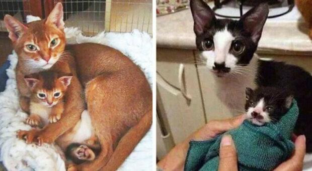 Koťata, která vypadají přesně jako jejich rodiče