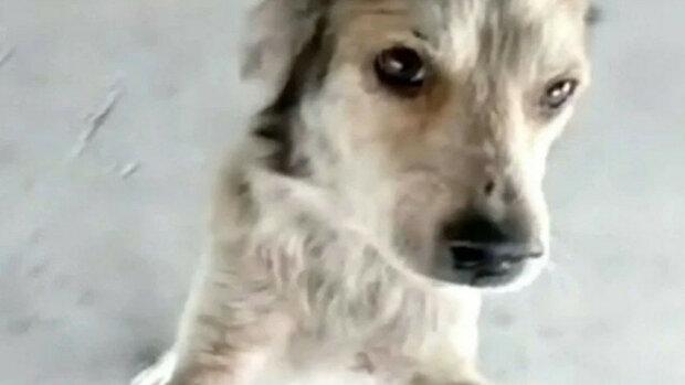 Pes byl nalezen asi po 3 měsících. Podívejte se na dojemné setkání. Video