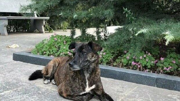 Nejvěrnější přítel: Opuštěný pes čeká na svého majitele poblíž domu už tři roky