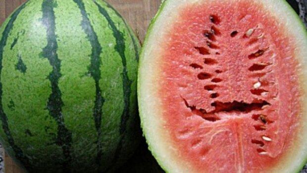 Když objevíte takovouto díru v melounu, tak jej radši nejezte