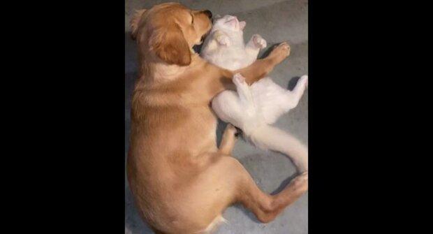 Pes zachytil štěně s kočkou ve sladkém objetí. Video ukazující veselou reakci chlupáče