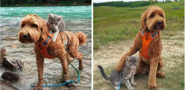 Půvabný příběh o koťátku, které našlo svého psa a vydalo se za ním. Přátelství na první pohled