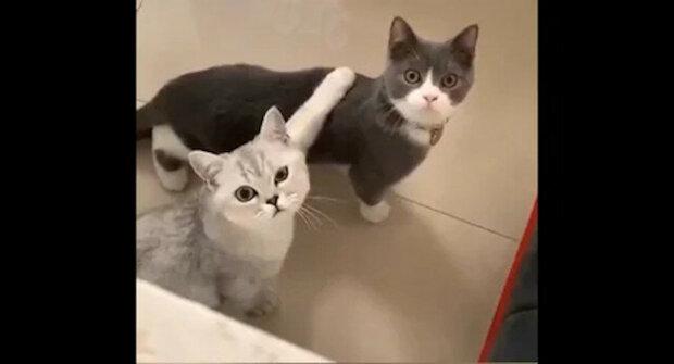 """""""Co to natáčíš?"""": Kočku rozčililo, že majitelka špehovala, když jde na písek. Zábavné video"""