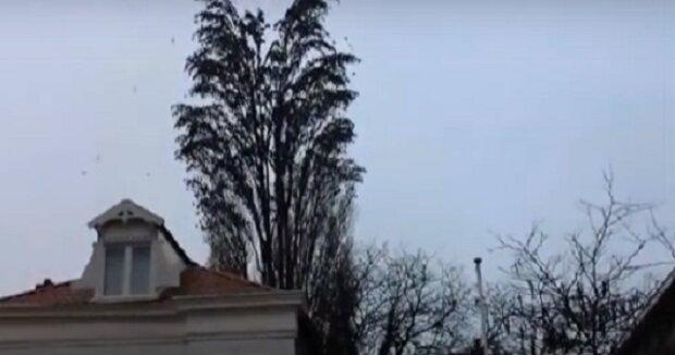 Nespouštějte oči z toho stromu a zachvíli se stane něco nevídaného