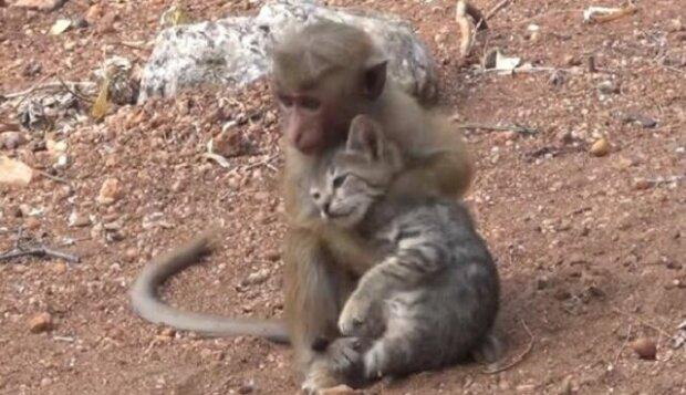 Malá opička chytila kočku a zkoušela jí zatáhnout do svého doupěte ve stromech