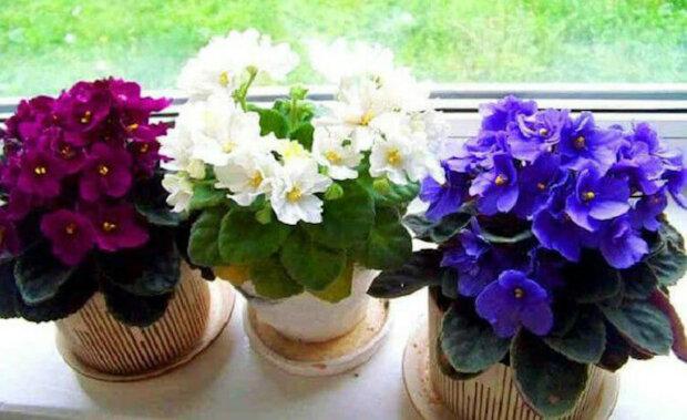 Tři jednoduché triky, jak udržet rostliny v květináčích zdravé a krásné. Určitě ožijí a rozkvetou