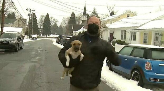 Předpověď počasí se změnila v rozkošné video, když do záběru spadlo štěně