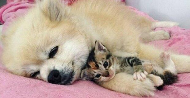 """Roztomilé přátelství mezi psem a kotětem. """"Nikde bez tebe nepůjdu"""""""
