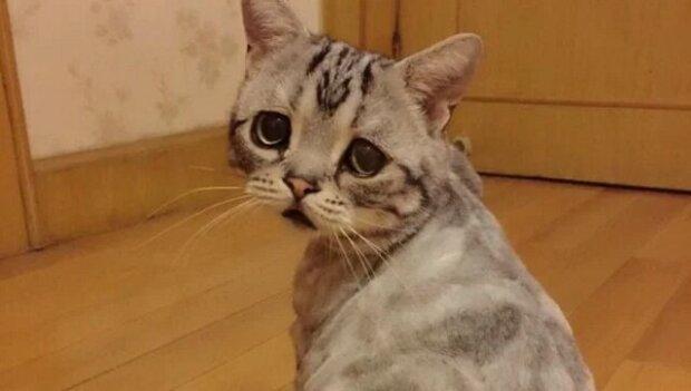 Někdy minuty zachraňují životy - sousedka zachránila kočku před uspáním a on jí po 30 minutách poděkoval