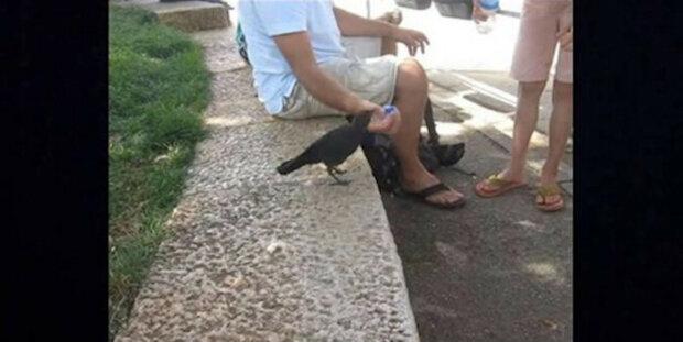 Pták měl žízeň a požádal lidi o pomoc