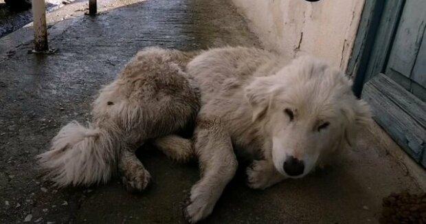 Zraněný pes padl na silnici a zavřel oči. Už nemohl ani chodit