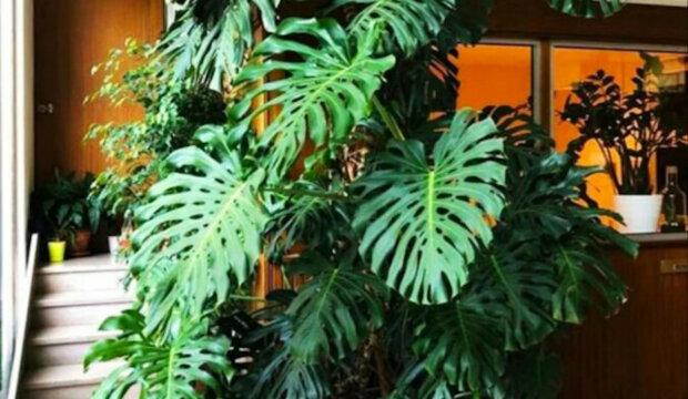 5 pokojových rostlin, které vás nechají na pokoji. Květiny odrazující muže