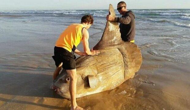 Rybáři si mysleli, že je to kus dřeva, ale ukázalo se, že je to vzácná ryba
