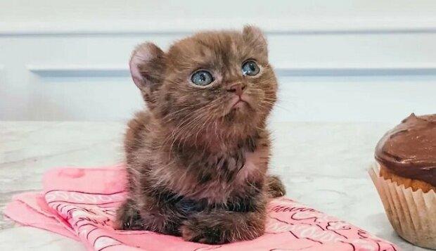 Kotě s poškozenými tlapkami a podivnýma ušima se dostalo do dobré rodiny a je konečně šťastné