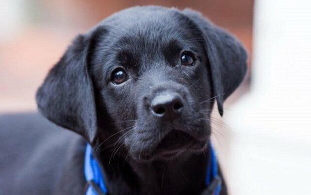 Jen proto, aby našel nového majitele, tak se štěně naučilo dokonce i usmívat. Podívejte se sami