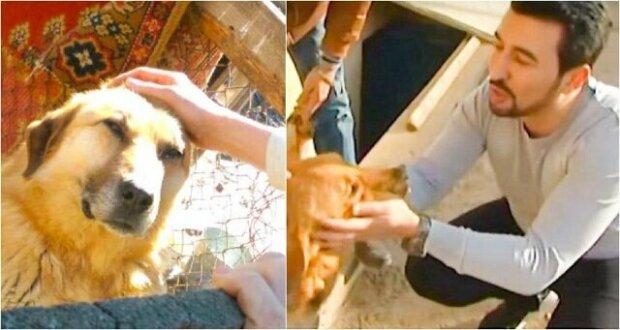 Tento muž zachránil již 350 psů! Nachází je na ulici, stará se o ně a pomáhá jim získat důvěru v lidi