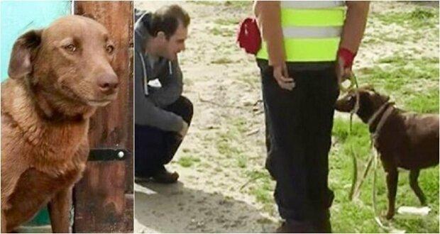 Pes rozeznal svého majitele po pachu i po dvou letech odloučení