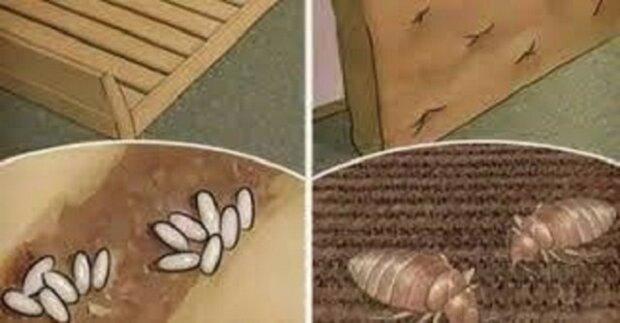 Jestli nechcete, aby ve vaší posteli kralovali roztoči, musíte přestat každodenně dělat přesně toto
