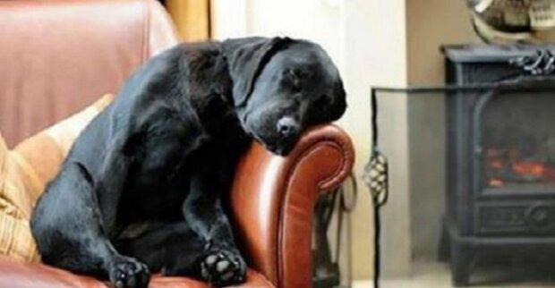 Muž adoptoval psa a zároveň s ním dostal i dopis od původního majitele – ten jej přivedl k slzám