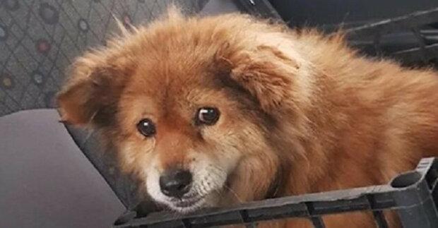 Malý starý pes několik dní čekal na pomoc v příkopu, ze kterého se nemohl dostat ven