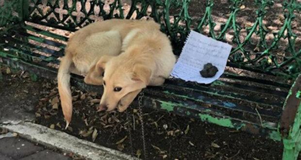 Dítě nechalo milovaného psa v parku se srdcervoucím vzkazem vysvětlujícím bezvýchodnou situaci