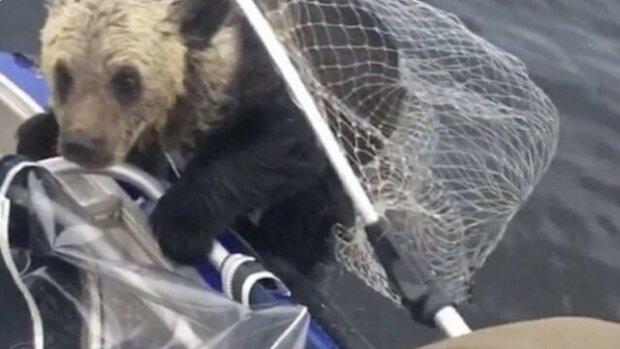 Medvěda nedokázala svým mláďatům pomoci, ale poblíž byli rybáři