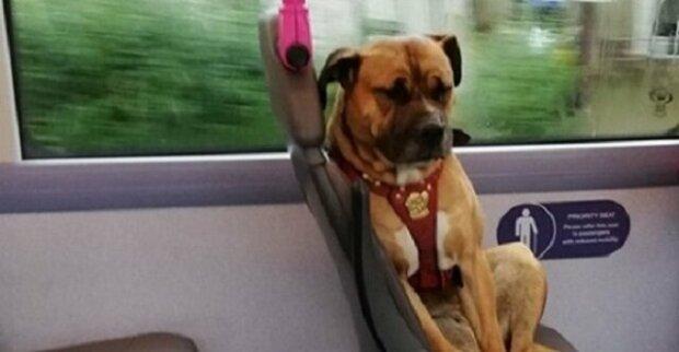 Obyvatele Anglie rozrušil pohled na osamoceného psa v autobuse