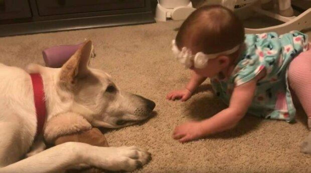 Dítě psa zasypává polibky - nikdo jeho reakci nepředvídal