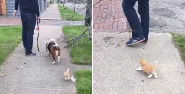 Malé kotě zvládá držet krok s procházejícími lidmi. To co se stalo potom je prostě úžasné