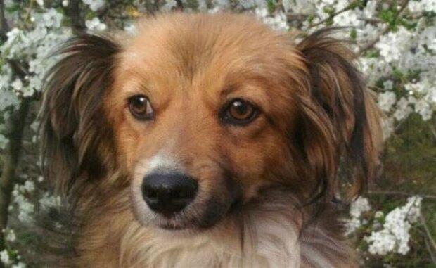 Pes umíral hlady a tak mu kolemjdoucí dala klobásu. Podívejte se, komu ji zanesl!