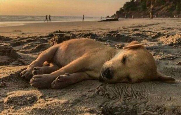 Tento pes se toulal po ulicích prosíc o pomoc, ale nyní již cestuje po celém světě