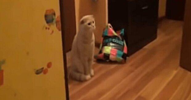 Kočka ji viděla, jak koupe své dítě, a její reakce je úžasná. Video