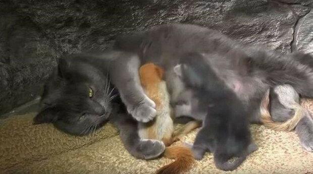 Kočka poskytla útočiště 4 malým veverkám, které potřebovaly matku