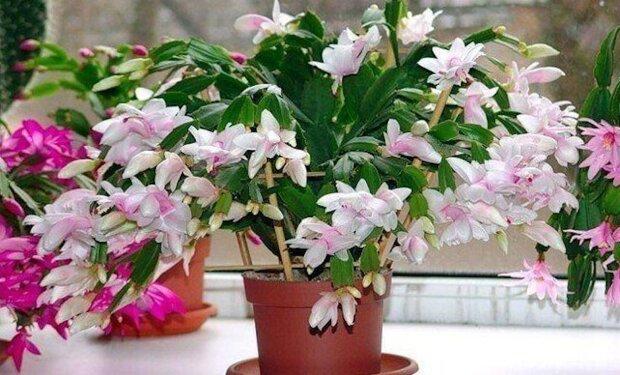 Nejjednodušší hnojivo, které vnitřní rostliny mají rády