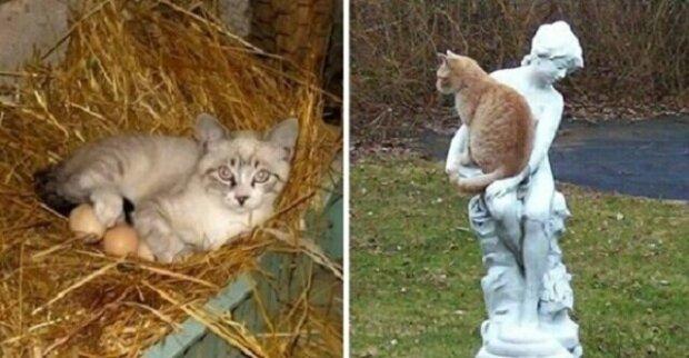 20 míst, na kterých byste určitě kočku nehledali, ale i přesto tam je