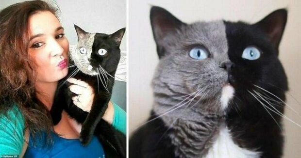 Kocour se dvěma tvářemi Narnia se stal otcem a genetika znovu překvapila všechny: zde jsou obrázky neobvyklých koťat