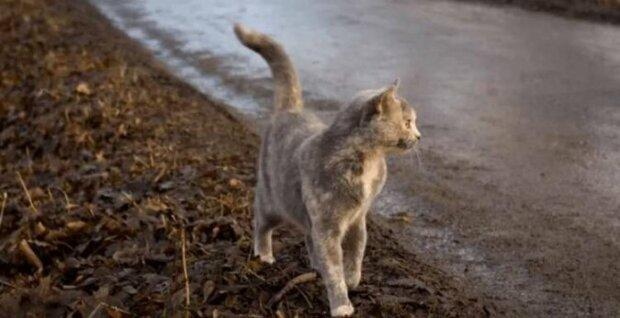 Kočka jménem Pusza opustila své malé koťata a utekla do lesa