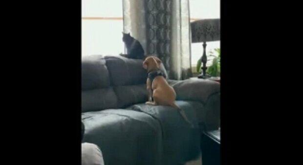 Štěně velmi roztomile objalo kočku, která se dívala přes okno. Video