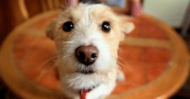 Muž pustil do svého domu toulavého psa a ten mu za to poděkoval