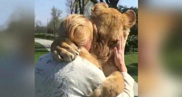 Vychovala dva osamělé mladé lvy a pak je musela poslat do zoo. O několik let později se znovu setkali