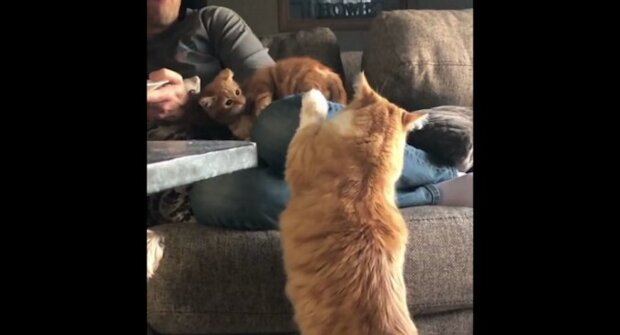 Kočka učí chlupatého synka dobrým mravům před jedícím páníčkem. Vtipné video