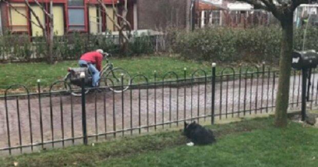 Pes se na zahradě nudil tak moc, že vymyslel geniální zábavu. Podívejte se!