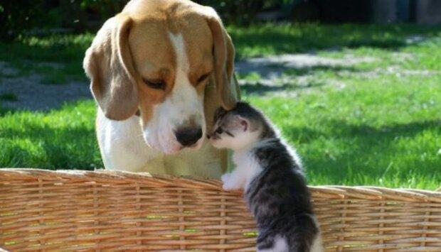 Loniin pes přinesl potravu březí kočce a později se stal otcem jejích dětí