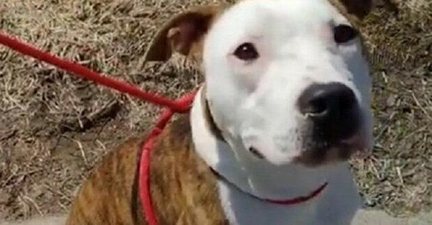 Štěstí není nikdy dost: chlapec i pes našli rodinu ve stejný den