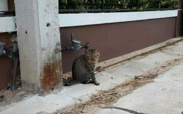 Muž několik dní hledal kočku. Kočka se vrátila s dopisem kolem krku a dluhem