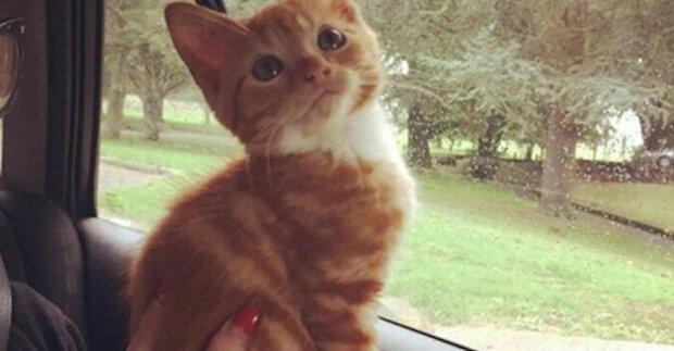 Dívka krmila kotě dobře, ale ono nerostlo. Důvod byl zjištěn po 7 měsících