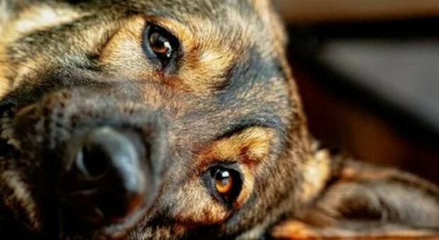 Jeden muž navštívil ovčáckého psa, se kterým sloužil mnoho let. Podívejte se na reakci psa