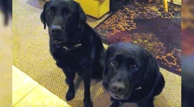 """Jak štěně odpovědělo na otázku svého majitele: """"Kdo ukradl sušenky?"""" Vtipné video"""